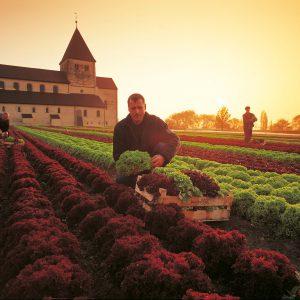 Gemüse Reichenau: das Leitmotiv