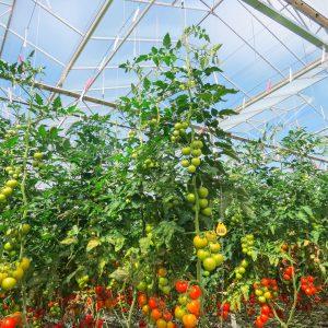 Auf der Gemüseinsel gedeihen Gemüse, Salate und Kräuter von höchster Qualität